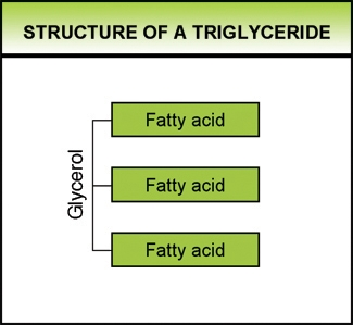 Fats – An Introduction & Triglycerides | Mission Nutrition